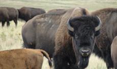 Indianerreise – Auf den Spuren der Büffel