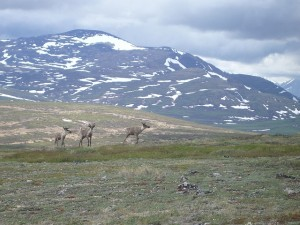 PKW Rundreise Nationalparks im Westen Kanadas