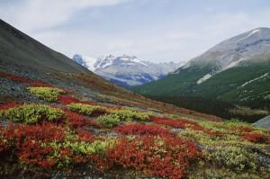 Eine Selbstfahrertour durch British Columbia mit deutschsprachigen Unterkünften